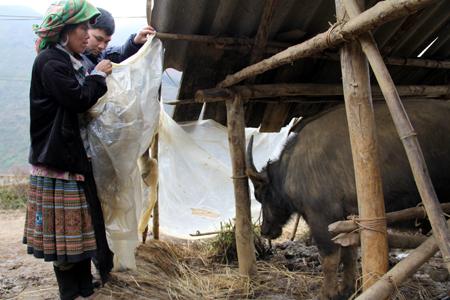 Kinh nghiệm phòng chống rét cho vật nuôi