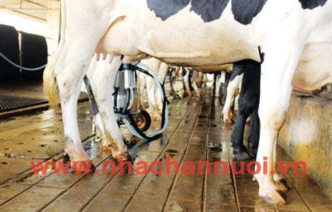 Một số biện pháp giúp hạn chế tình trạng nhiễm vi sinh sữa