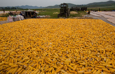 Ngô từ Thái Lan và Lào nhập khẩu về Việt Nam tăng rất mạnh