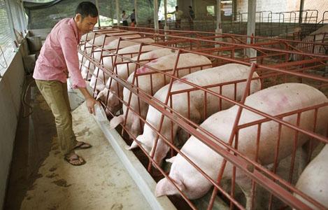 Quy hoạch chăn nuôi phải gắn với thị trường