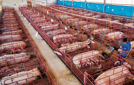"""Ngành công nghiệp thức ăn chăn nuôi thế giới: """"Bức tranh"""" nhiều màu sắc"""