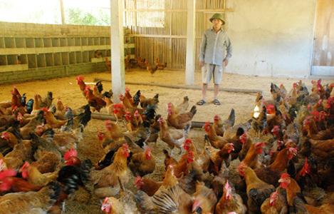 Đồng Nai: 79 trang trại đạt chứng nhận VietGAHP