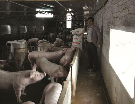 HASCO FEED: Đồng hành cùng người chăn nuôi
