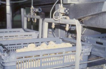 Kỹ thuật đưa vacxin cho gia cầm