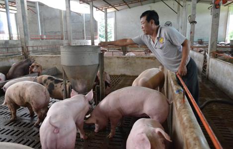 Giá heo hơi hôm nay 9/9: Miền Nam nhích lên, heo Trung Quốc vượt mức 50.000 đồng