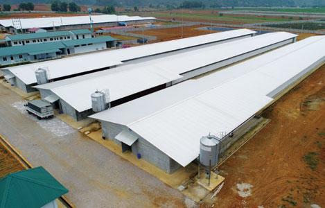 Công ty TNHH NS Bluescope Lysaght Việt Nam: Mang đến giải pháp chuồng trại tiên tiến cho nhà chăn nuôi