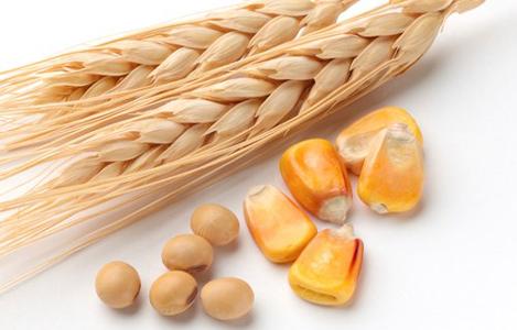 USDA: Dự báo cung cầu lúa mì và ngô thế giới niên vụ 2017/18