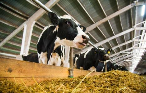 Một số biện pháp giúp tăng hiệu quả sản xuất sữa