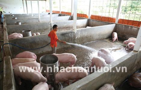 Thống Nhất (Đồng Nai): Số lượng gia súc, gia cầm giảm so với năm trước