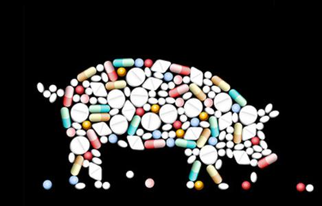 WHO: 80% kháng sinh trên toàn thế giới được sử dụng trên động vật