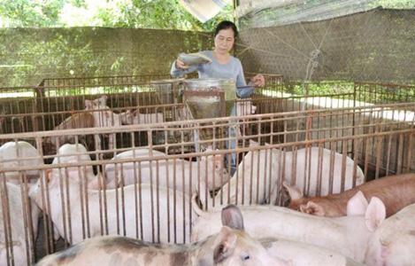 Gian nan lối thoát cho chăn nuôi heo ở Đồng Nai