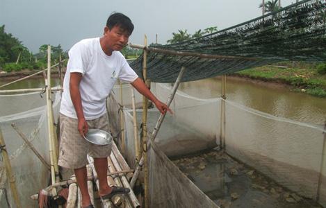 Bí quyết thành công của người có thâm niên 10 năm nuôi ếch Thái Lan