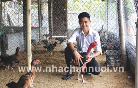 Bí kíp nuôi gà chọi kiếm bạc tỷ mỗi năm của chàng trai trẻ