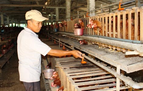 Bình Định: Giá trứng gia cầm tăng mạnh trước dịp Tết Trung thu