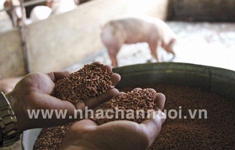 Phản ứng maillard trong thức ăn chăn nuôi