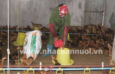 Thanh Hóa: Giá trị sản xuất ngành chăn nuôi của huyện Lang Chánh đạt 124 tỷ đồng