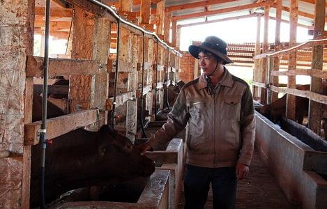 Lâm Đồng: Tỷ lệ đàn bò lai đạt 67% tổng đàn bò thịt
