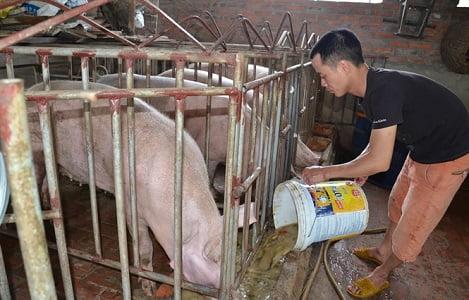Chủ tịch Hội Chăn nuôi Việt Nam gửi tâm thư cho lãnh đạo Quốc hội, Nhà nước
