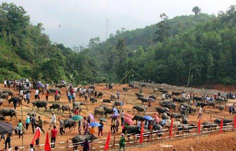 Hà Giang: Khai trương chợ gia súc xã Khuôn Lùng