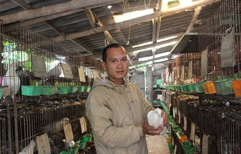 Kiểm tra chi tiết hồ sơ 100% với trâu bò sống nhập khẩu