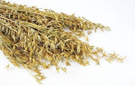 Hợp chất phenolic trong thức ăn chăn nuôi