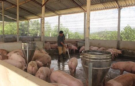 Gần 40 tỷ đồng hỗ trợ xây dựng công trình xử lý chất thải chăn nuôi