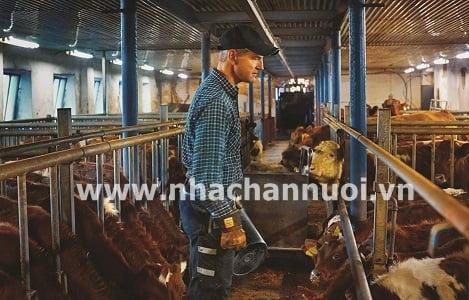 Sảy thai ở động vật: Cần xác định tác nhân để điều trị thành công