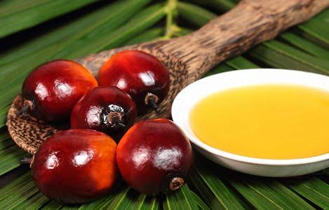 Khô dầu cọ, nguồn nguyên liệu để sản xuất thức ăn chăn nuôi