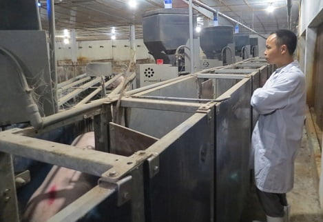 Người sở hữu trang trại chăn nuôi thông minh