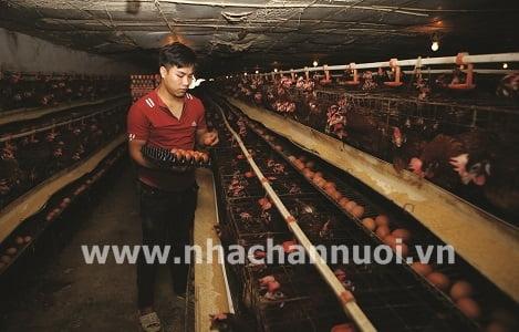Chiến lược phát triển chăn nuôi: Điều chỉnh theo thị trường