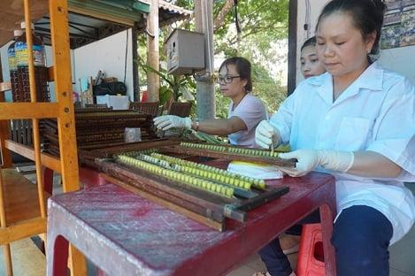 Nuôi ong mật lấy sữa đang phát triển ở Lâm Đồng