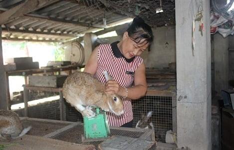 Mô hình nuôi thỏ, gà kết hợp trồng trọt, thu 30 triệu đồng/tháng
