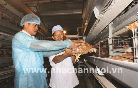 Hối hả tìm đối tác xuất khẩu trứng gia cầm