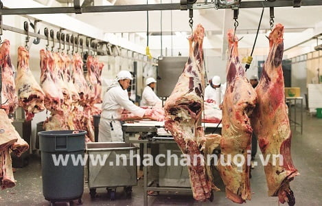 Yêu cầu khắt khe khi nhập khẩu thịt vào Liên minh châu Âu