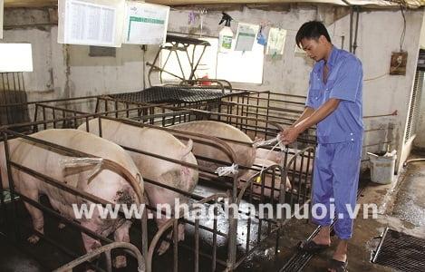 Hiện trạng công tác giống heo ở Đồng bằng Sông Cửu Long