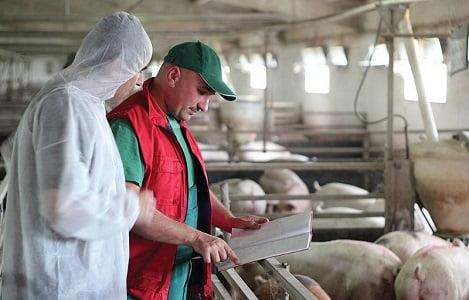 Vì sao nhu cầu protein ở vật nuôi bị bệnh khác biệt so với vật nuôi khỏe mạnh?