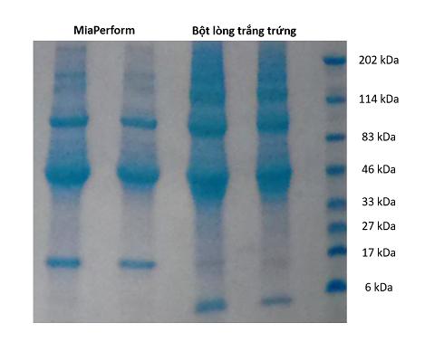 Chuỗi peptide có hoạt tính sinh học