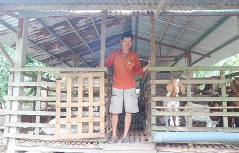 Nở rộ mô hình nuôi dê ở đồng bằng sông Cửu Long