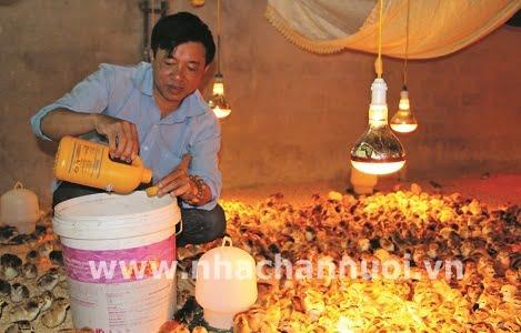Acid hữu cơ: Giải pháp hiệu quả trong chăn nuôi gia cầm