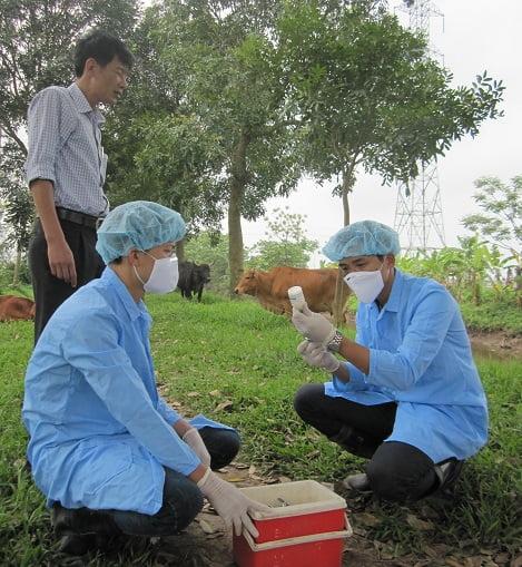 Các biện pháp kỹ thuật bảo vệ đàn vật nuôi trong dịp Lễ, Tết