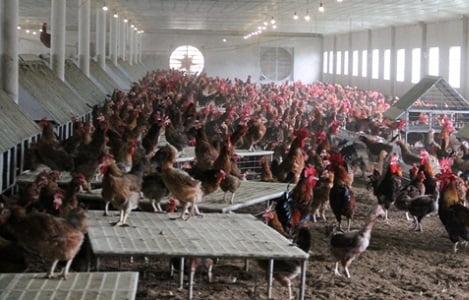 Cơ hội kết nối xuất khẩu các sản phẩm chăn nuôi