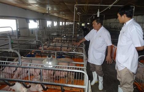 Trang trại khép kín từ giống, thức ăn tới chế biến sản phẩm