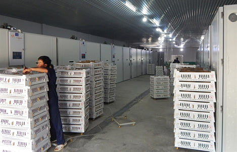 Truy xuất nguồn gốc gà giống bằng Smartphone