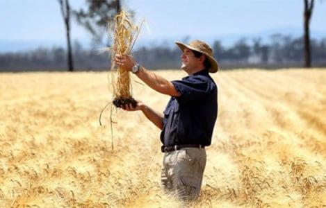Vì sao ngành nông nghiệp Úc lại phát triển thành công đến thế?
