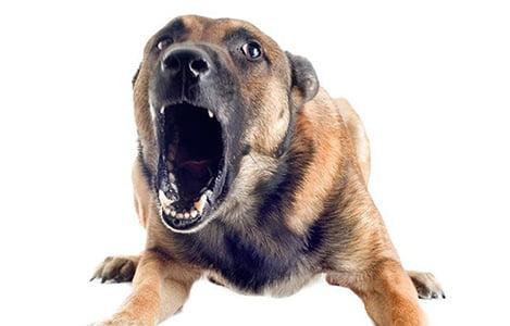 11 dấu hiệu để phát hiện sớm ung thư ở chó