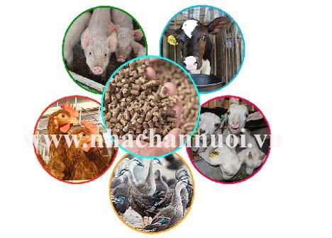 6 điểm nhấn ngành chăn nuôi 2017
