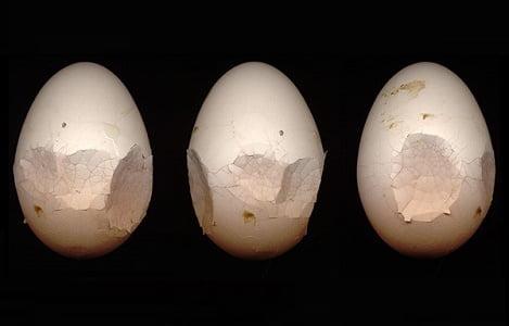 Biện pháp nâng cao tỷ lệ đẻ và chất lượng trứng gia cầm