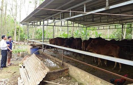 Đáng nể một trí thức trẻ về quê lập nghiệp làm giàu từ nuôi bò và trùn quế