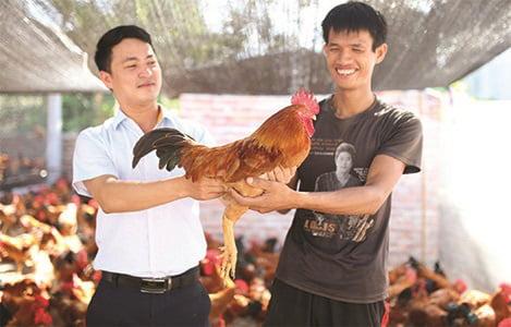 Đột phá thứ 2 trong chăn nuôi gia cầm: Công nghệ vaccine từ Pháp kiểm soát tối ưu Cúm gia cầm cho người chăn nuôi Việt