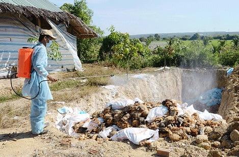 Xuất hiện ổ dịch cúm gia cầm độc lực mạnh ở Phú Yên
